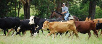 Какие документы нужны для фермерского хозяйства