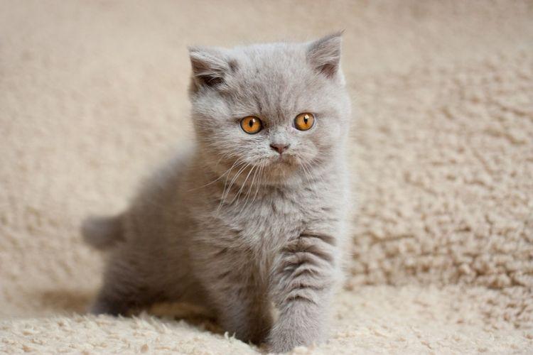 Примета к чему приходит белая кошка в дом