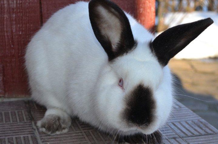 Кролики на даче плюсы и минусы