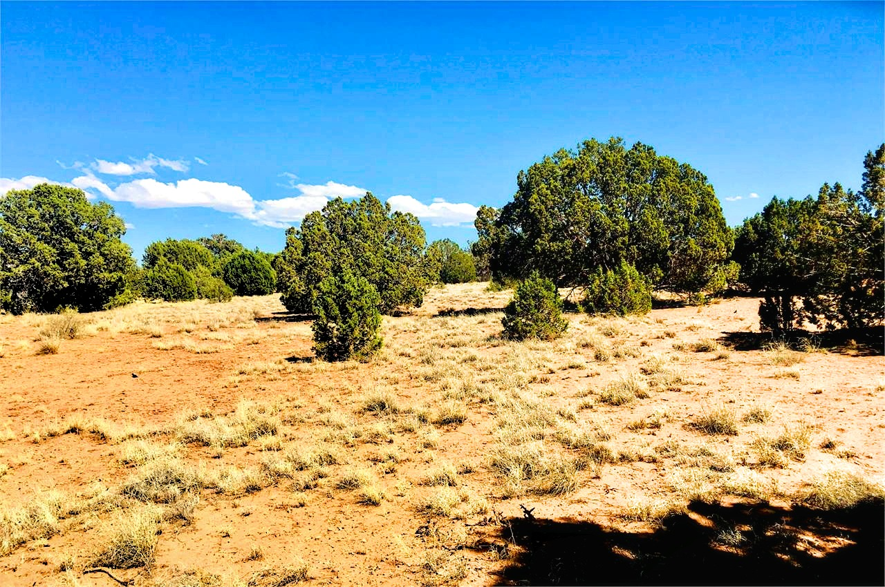 Land for Sale in Navajo County with plenty of Space