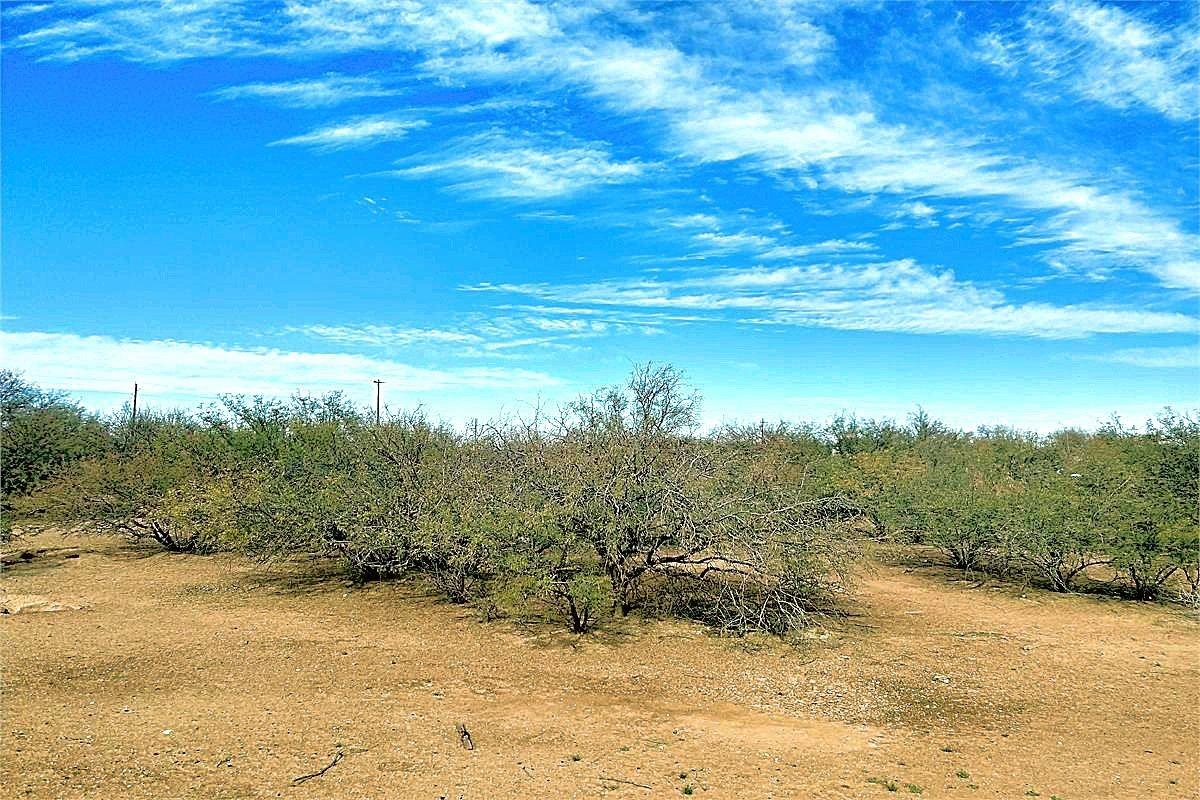 Vegetation on the land