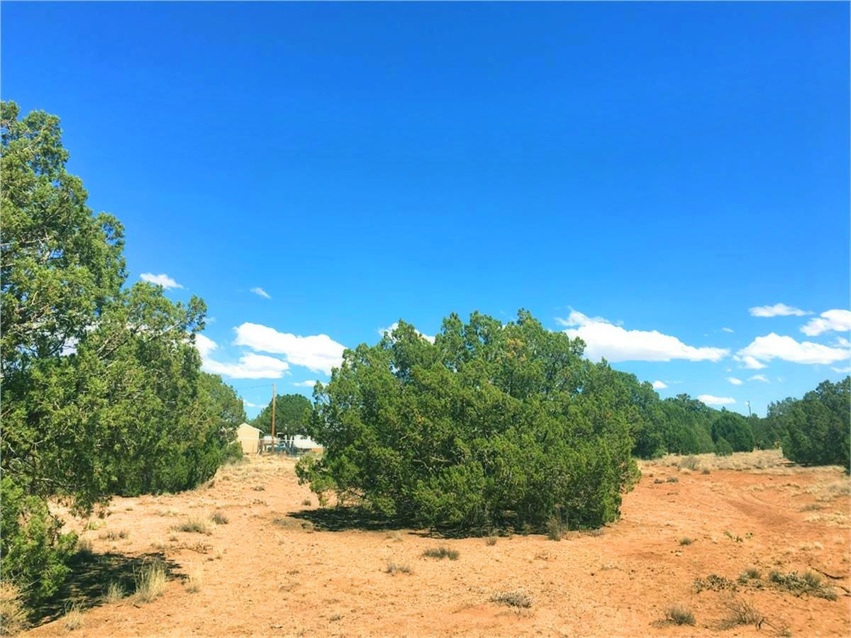 4451 Clydesdale Rd Snowflake Az - More Juniper Trees