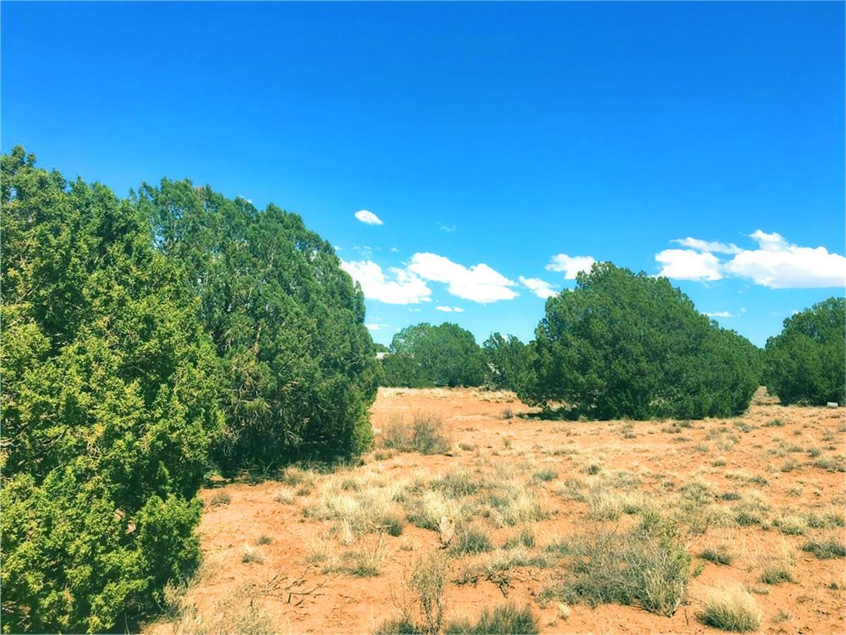 4451 Clydesdale Rd - Juniper Trees