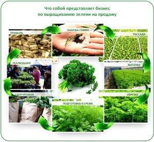 Бизнес план выращивание зелени в теплице круглый год