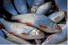 Продаж живої риби