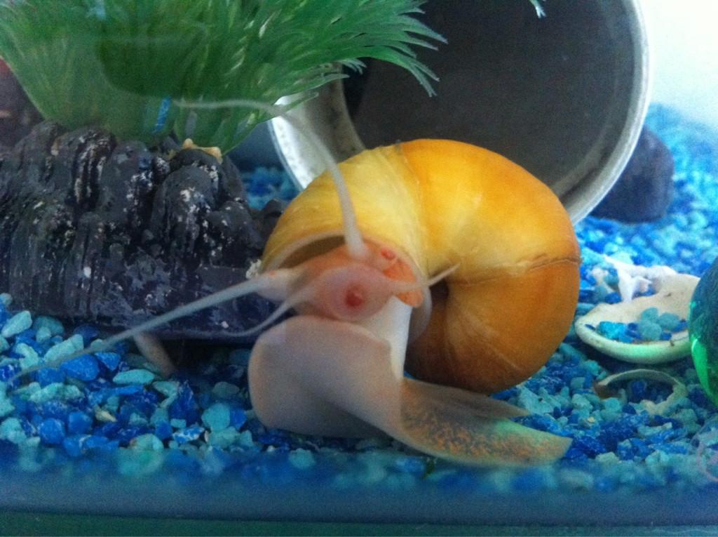 Petsmart snails