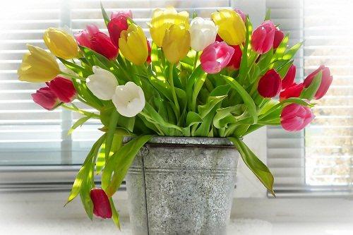 Желтые тюльпаны во сне