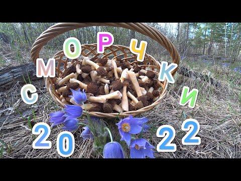 Суперпесня про ЕГЭ. Вячеслав Мясников