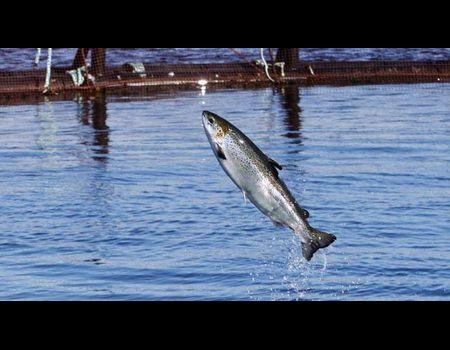 Выращивать рыбу на продажу