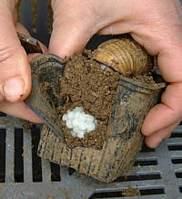France snails