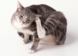 От блох безопасные средства для кошек