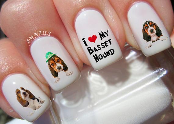 Basset hound eats nails