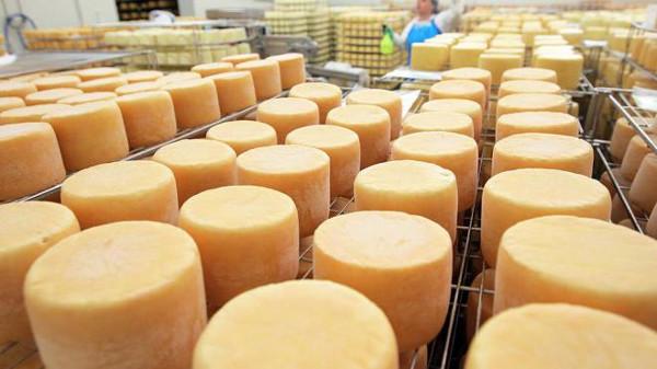 Сыр производство