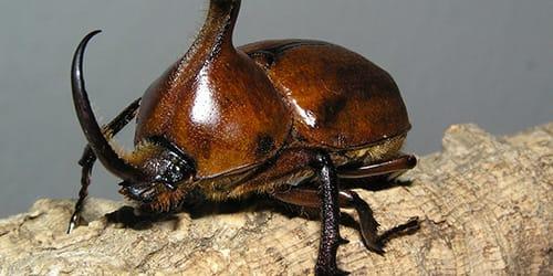 Приснился черный жук
