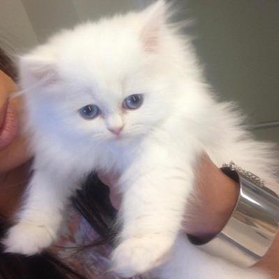 Kim kardashian kitty