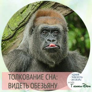 видеть обезьяну во сне