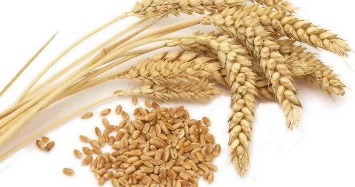 Сколько варится крупа пшеничная