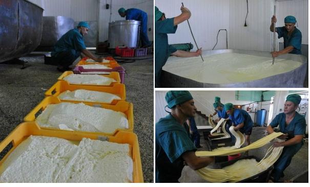 Бизнес производство сыра