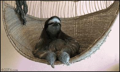 Ленивец в гамаке