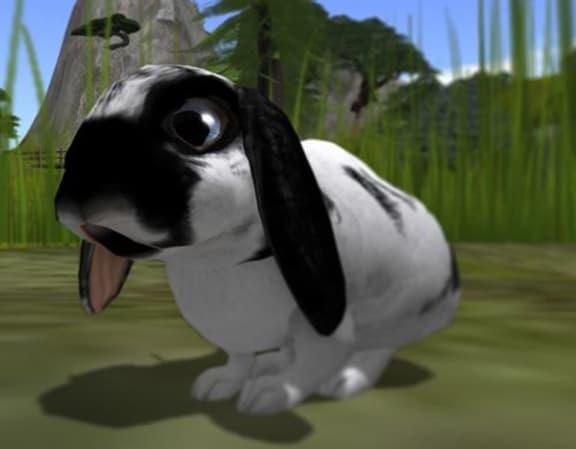 Massdöd av kaniner idag