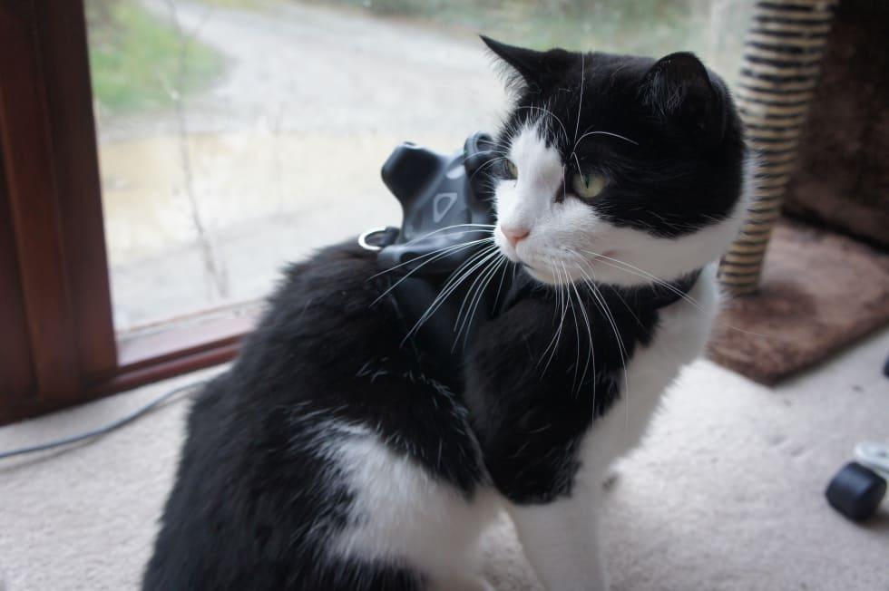 Nu kan du spela VR med din katt