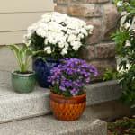 Jewel-Tone Flower Pot Trio - 2