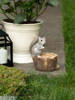 Squirrel Tree Trunk Bird Feeder - 8
