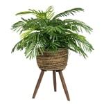 Phoenix Palm in Deco Basket Stand - 1