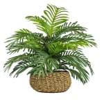 Palm in Low Basket Planter - 1