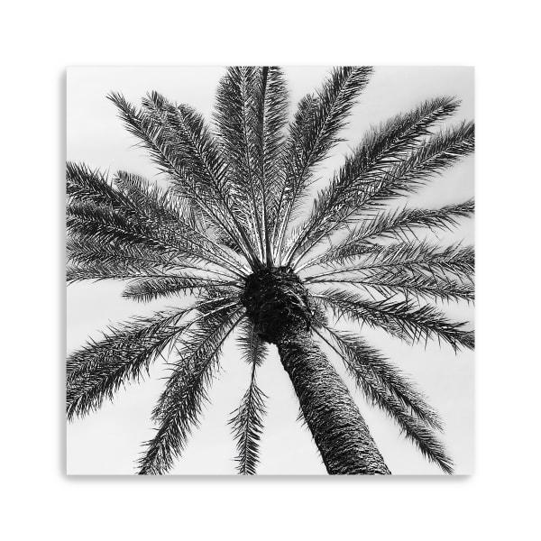 Skyward Palm Canvas Giclee