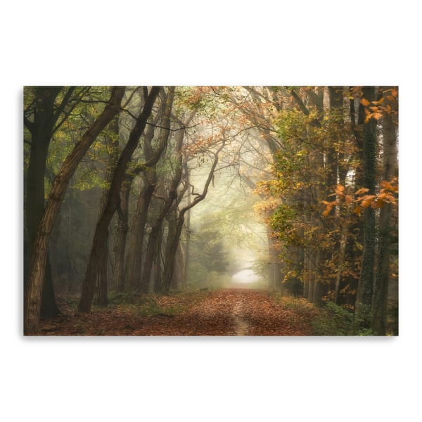 Path Of Dreams Canvas Giclee
