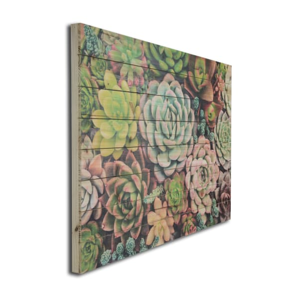 Succulent Garden Planked Wood Floral Art Print