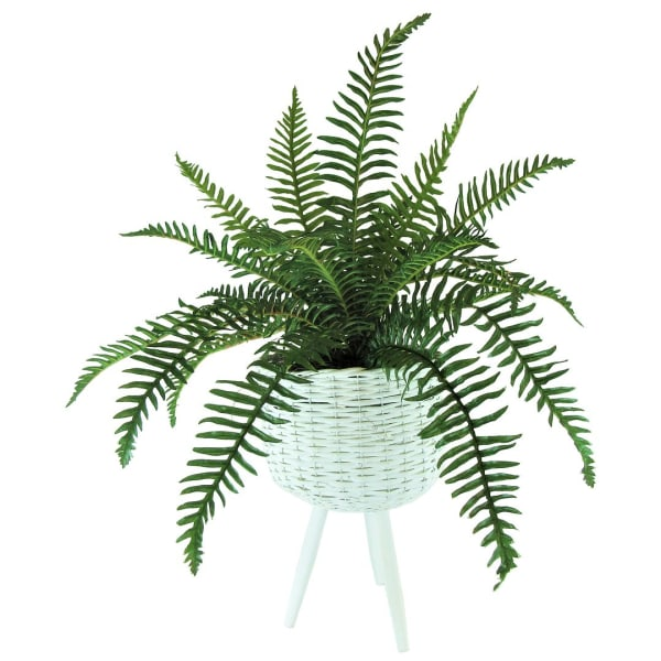 Fern Plant in White Basket