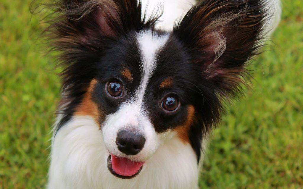 Какая собака самая добрая в мире