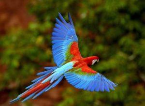 Чем отличается мальчик от девочки попугаи