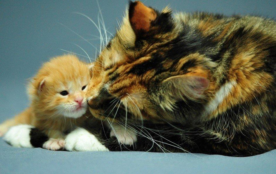 Приметы кошка в доме