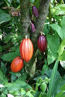 Шоколад производство