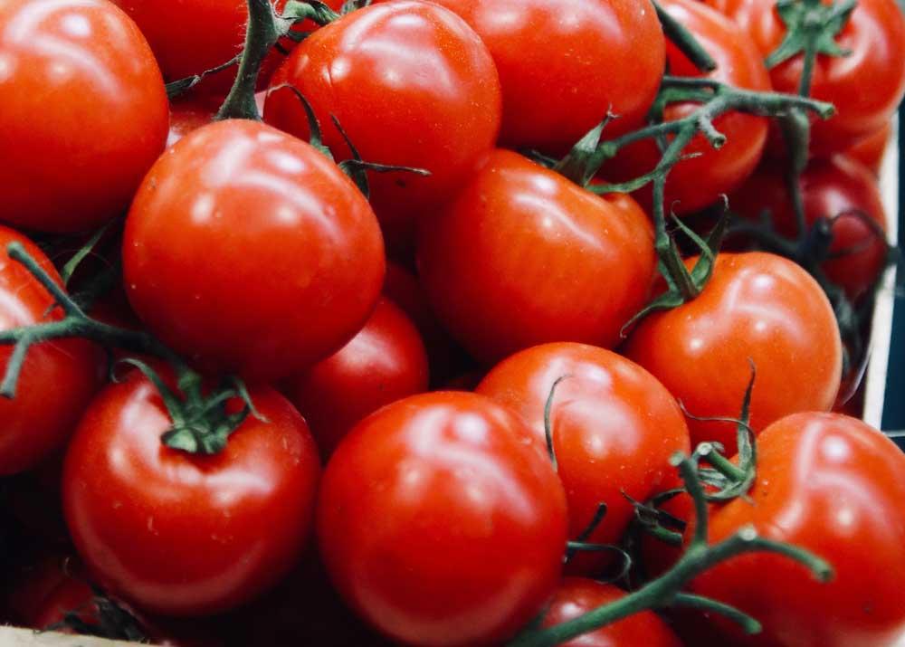 Бизнес на помидорах