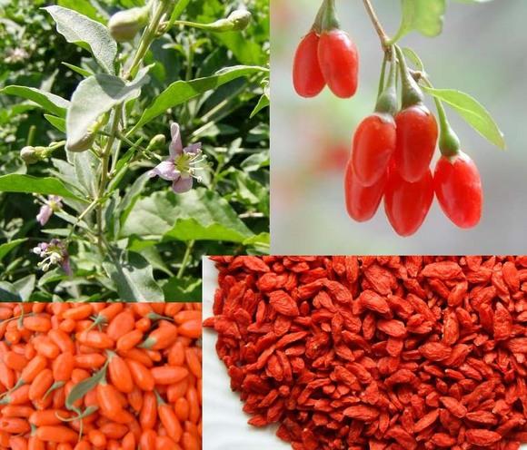 Реальные отзывы о ягодах годжи для похудения