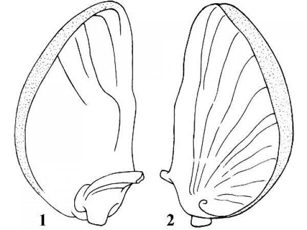 Florida snails species