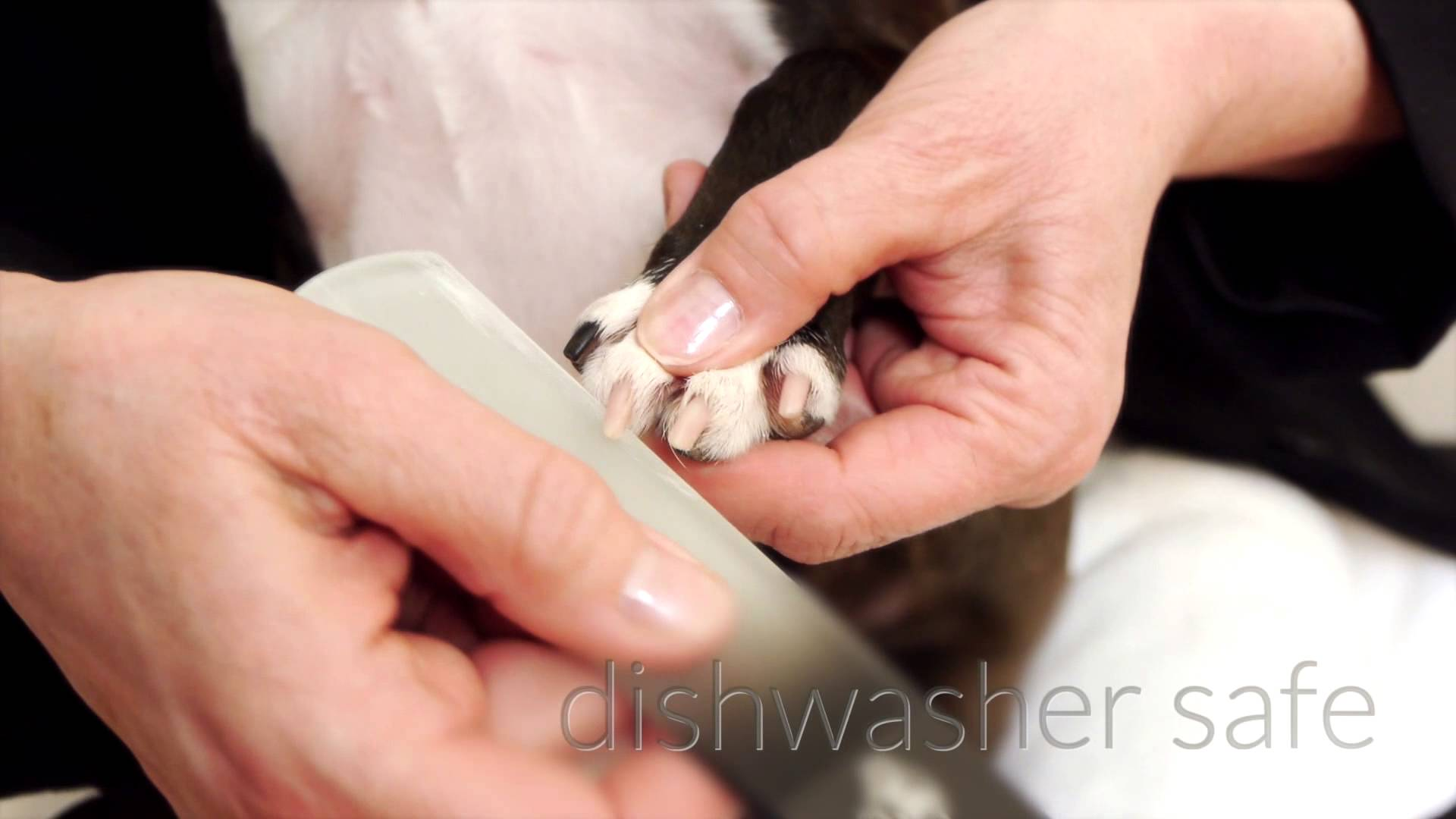 Dog file for nails