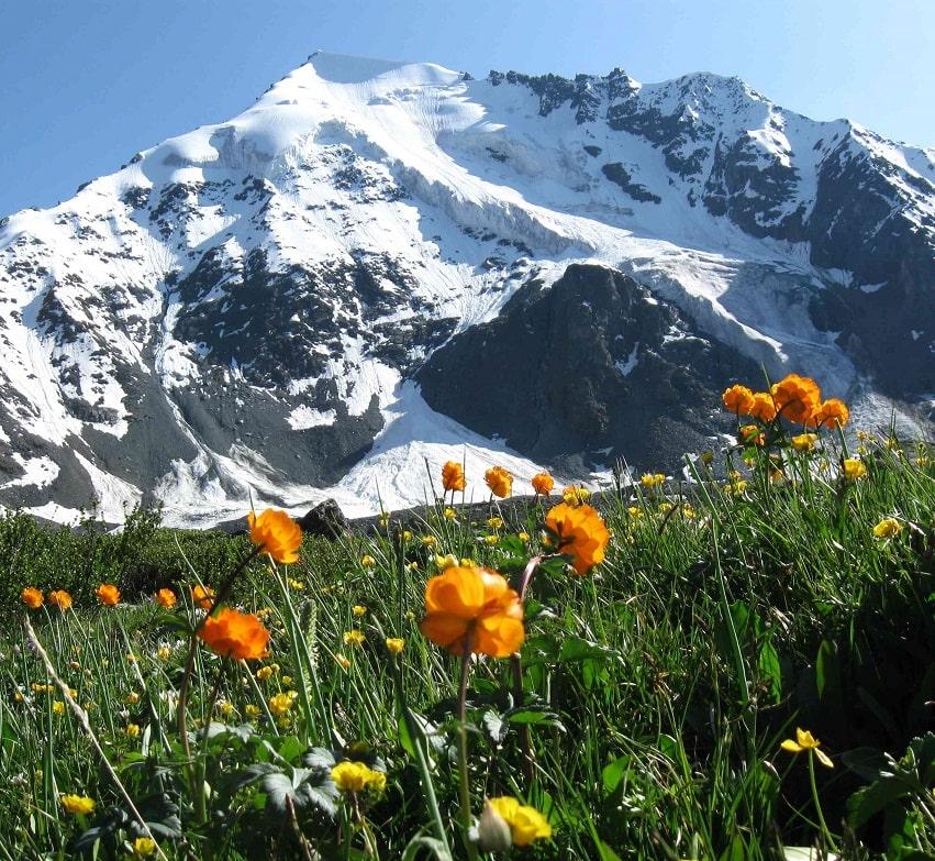 Флора Алтайских гор