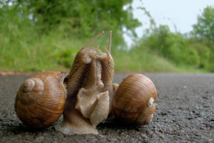 Can snails reproduce by themselves