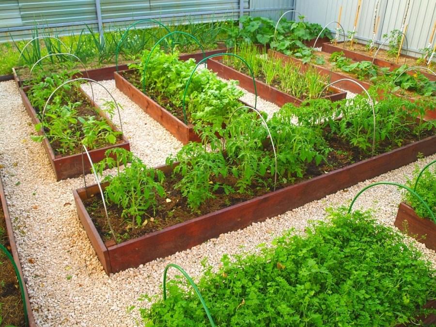 Ограждения для огорода фото
