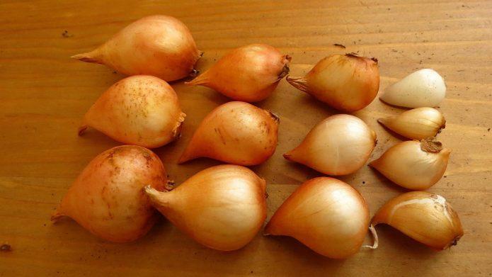 Когда нужно высаживать луковицы тюльпанов осенью