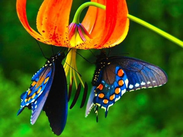 Сонник бабочки в доме