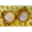 Honey Good, 100% All Natural Royal Jelly Premium Quality - 2.2 LB (1kg)