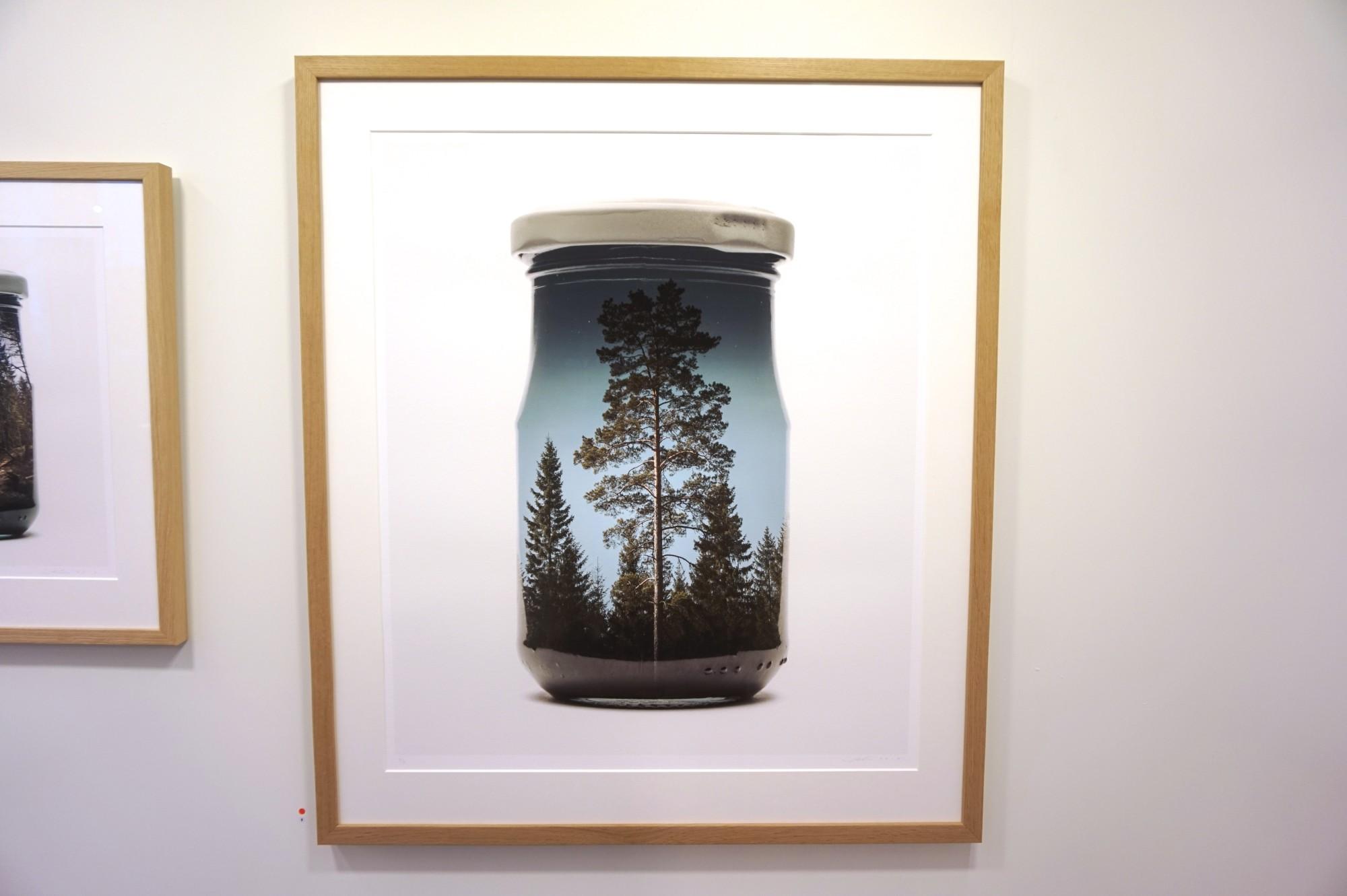 Alternative image for Jarred Pine Tree (Medium)