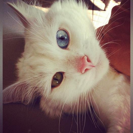 Коты Влада Лисовца
