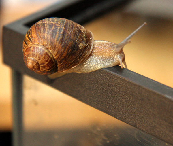 Movement of snails